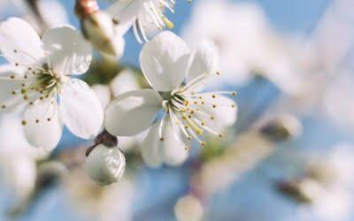 Baharın habercisi Hıdırellez şenliksiz olmaz! 🌸